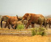 Mali-ElephantsCW 2