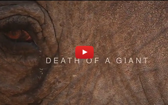 death-of-a-giant