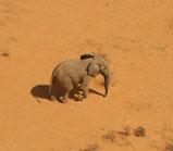 Mali elephants