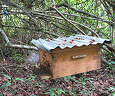 gabon-beehive