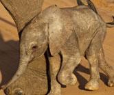 Naming Elephants