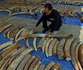 thailand-ivory-burn