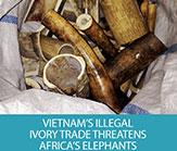 Vietnam's-Report