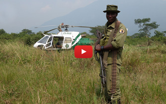 Virunga collaring
