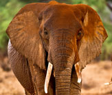 Elephant Pic