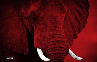 Elephants need us