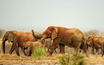 Mali-elephants_CW